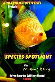 Species Spotlight Royal Gramma (2014– ) Online
