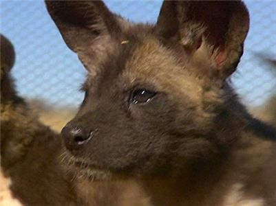 Wild Animal Orphans Painted Pups (2012– ) Online