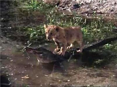 Daktari Adventure of the Lion Cubs (1966–1969) Online