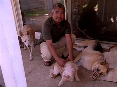 Dog Whisperer with Cesar Millan Tara, Molly & Mandy, Olive, and Dexter (2004–2016) Online