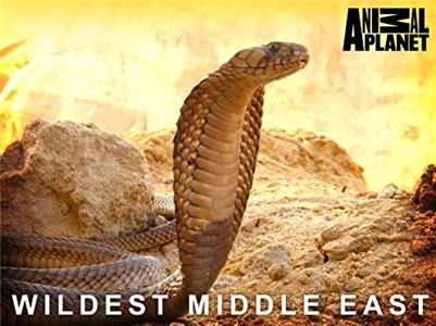 Wildest Middle East  Online