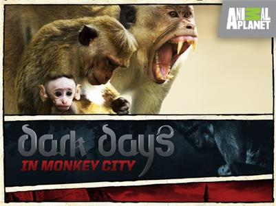 Dark Days in Monkey City  Online