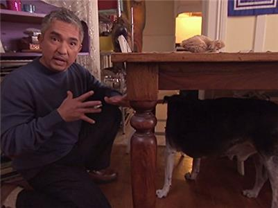 Dog Whisperer with Cesar Millan My Life on the Dog List (2004–2016) Online