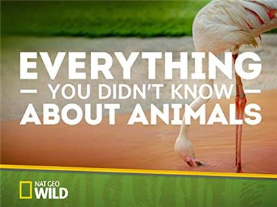 Everything You Didn't Know About Animals Tigers, Rhinos & Naked Mole Rats (2015– ) Online