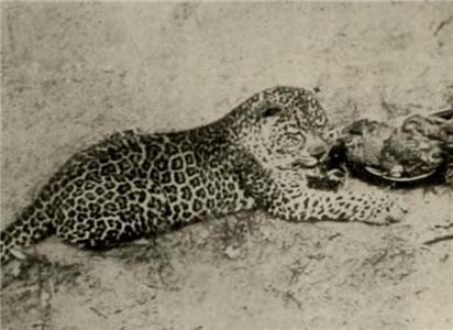 How Wild Animals Live (1913) Online