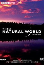 Natural World Wild Indonesia: Magical Forests (1983– ) Online
